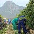 #WeeklyWineWrap: SA wine industry could add 100,000+ jobs by 2025