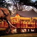 Elephant Café launches on the banks of the Zambezi