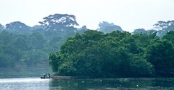 DR Congo to scrap illegal China logging contracts