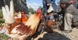 FAO calls for increased vigilance as avian influenza virus H5N1 advances