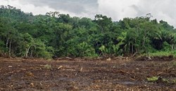 Better forest management needed for building sustainable agriculture
