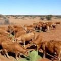 "AFASA approves ""My Kraal"" app for member farms"