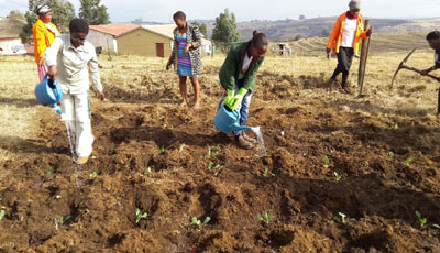 Sappi's Highflats foresters repurposed their skills to plant cabbages, spinach, beetroot and carrots to ensure a fresh supply of veggies at the Thathane Crèche in the Kwa-Thathane community near Ixopo.