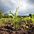 ConCourt freezes 100,000 land claims