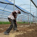 Newly empowered black farmers ruined by South Africa's drought