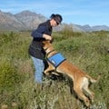 Conservation Detection Dog Project