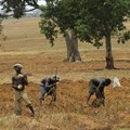 Mike Blyth via  - Farmers in Nigeria