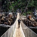Ten reasons why you should visit the Tsitsikamma National Park