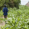 Drought in southern Africa today: a preview of what climate change could bring and how African farmers can adapt