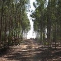 Egypt uses sewage to grow forests in the desert