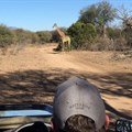 10 reasons why you need to visit the Thornybush Game Reserve