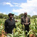 - Simnai and Phillip Tshuma, smallholder farmers from Hwange, Zimbabwe, show off their sorghum crop planted using fertilizers. Photo: Busani Bafana