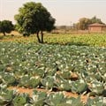 Checkers partners with Food and Trees for Africa to establish sustainable food gardens