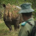 Minister releases rhino poaching figures
