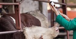 Addressing antimicrobial resistance on our farms and in our food