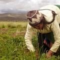 Harvest season expected to grow Ghana agri-tech startup
