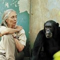 G Adventures launches Jane Goodall Collection