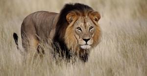 Conservation trumps commerce at CITES CoP17 - IFAW