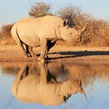 The ban on rhino horn sales leaves open the question of conservation funding