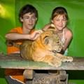 TripAdvisor bans booking activities with captive animals