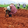 South African minister commends pro-women agri initiative
