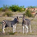 Ten reasons why you should visit the Mashatu Game Reserve