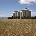 SA agribusiness: looking ahead to 2017