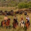 Ten reasons why you need to experience a luxury Botswana safari
