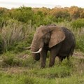 Why Zimbabwe's use of elephants to pay off old debt to China is problematic