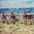 Ten reasons why you should explore the Karoo in 2017