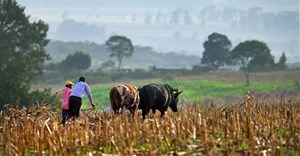 African agriculture on the World Economic Forum annual meeting agenda