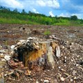 Activists slam giant Indonesian mill for environmental damage