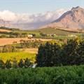 Buyers in Cape Winelands predominantly Gauteng semigrants, increasingly Europeans