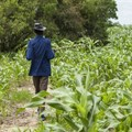 What does the future hold for Africa's farmers?