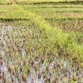 How farmers in Africa are finding ways to sustainably use wetlands