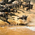 Five safari destinations for first-time travellers