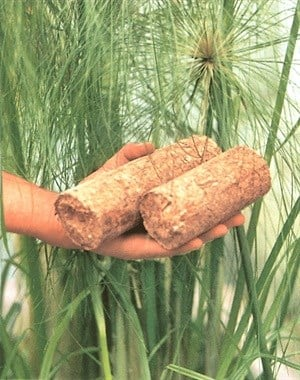 Briquettes from papyrus can replace biomass as biofuel. Author supplied