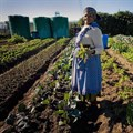 Policy implementation failing SA citizens in guaranteeing access to food