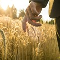 Junk status bad news for agribusiness and food security