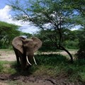Endangered species poached in protected areas: WWF