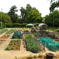 #UrbanAgri: Let It Grow Foundation helps communities grow their own urban farms