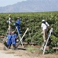 Why small producers have big concerns about multinationals joining Fairtrade