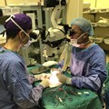 SU's second successful penis transplant