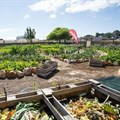 Shoprite opens doors to community gardens for World Hunger Day