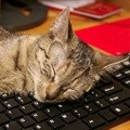 De-stress with pets in the workplace