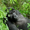 Four alternatives to gorilla trekking in Rwanda