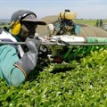 Technology, like this tea-picking machine in Kenya, can harness agriculture's power to change lives. Reuters/Thomas Mukoya