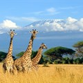 Image Supplied: Kilimanjaro