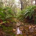 Knysna Forest - Theunis Schutte
