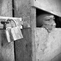 Suspected human trafficker appears in court